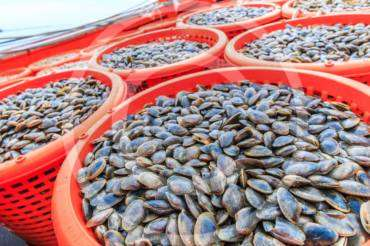 Indonesia Fresh and Frozen Fish Export